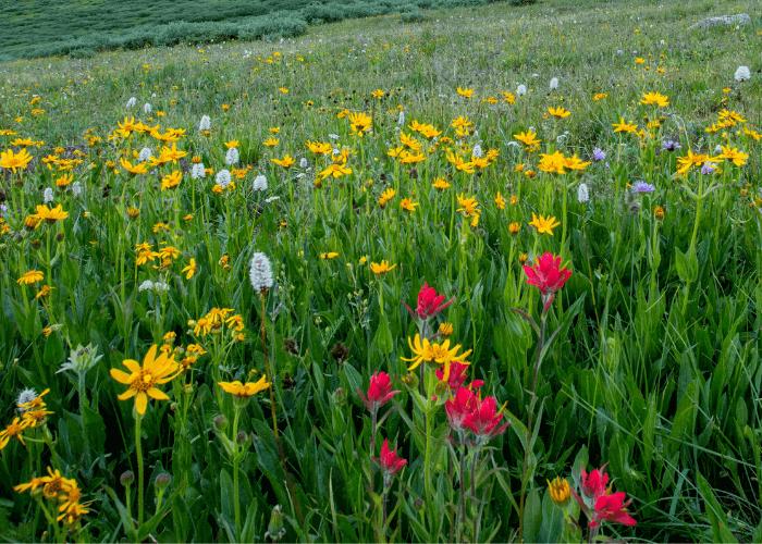 Wildflower Hikes - Spruce-Creek