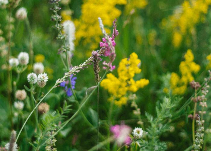 Wildflower Hikes - Upper Straight Creek